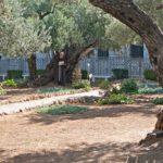 Franziskanermönch im Garten Gethsemani auf dem Ölberg