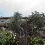 Hebron: Siedler-Wohncontainer in Tel Rumeida oberhalb von Hashem Azzehs Haus
