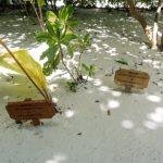 Hochzeiten auf Medhufushi