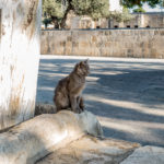 Katze auf dem Tempelberg