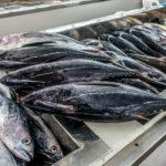 Auf dem Fischmarkt von Matrah