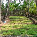 Salala, Plantage von Herrn Ali