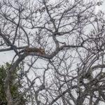 Florida, Everglades: Leguan und Geier