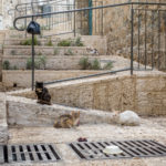 Jerusalem - Katzen