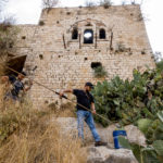 Jerusalem - Ernte der Kaktusfeigen in Lifta