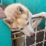 Trinidad - Haushund der Casa particular