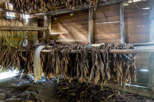 Vinales - Tabakproduktion