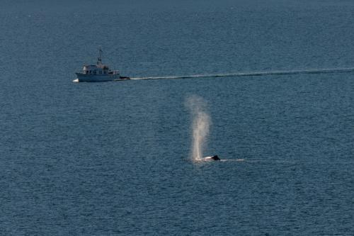 Fischerboot und Buckelwal am Ausgang des Tracy-Arm-Fjord