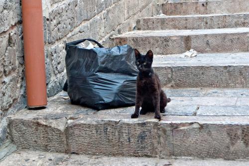 Katze beim Aufstieg zum Dach der Grabeskirche