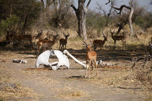 botswana2008_animals_01