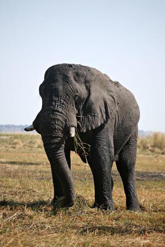 botswana2008_animals_02