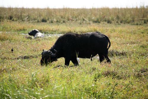 botswana2008_animals_03