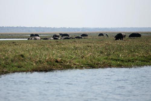 botswana2008_animals_04