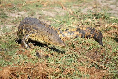 botswana2008_animals_05