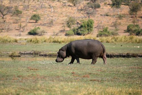botswana2008_animals_06