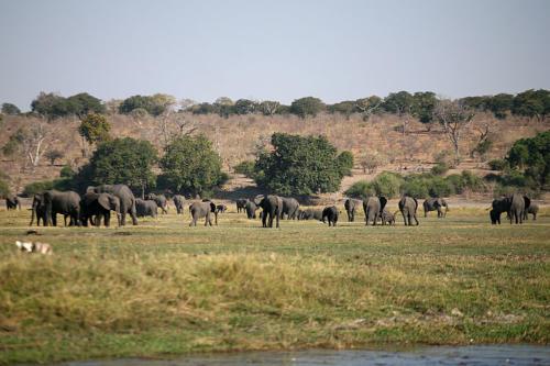 botswana2008_animals_07