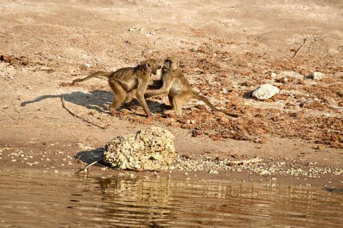 botswana2008_animals_09