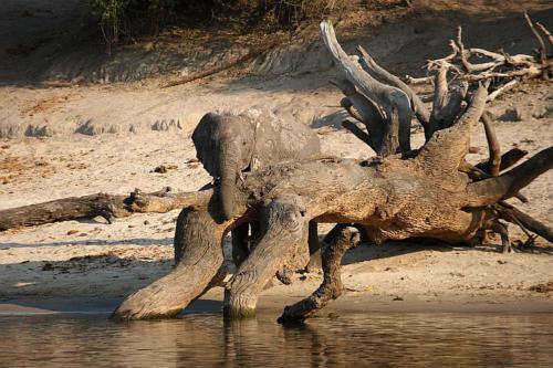 botswana2008_animals_10