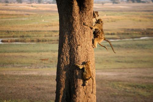 botswana2008_animals_11