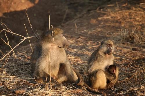 botswana2008_animals_12