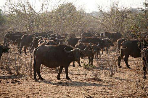 botswana2008_animals_13