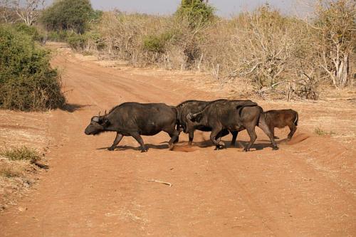botswana2008_animals_14