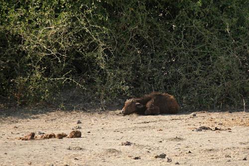 botswana2008_animals_15