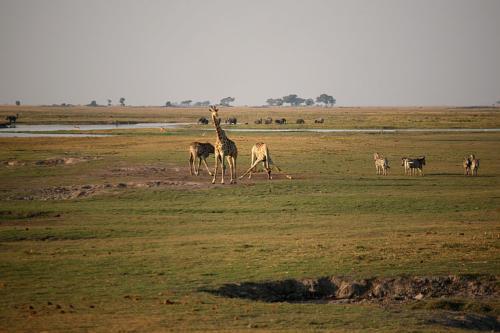 botswana2008_animals_17