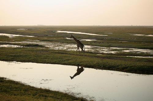 botswana2008_animals_18
