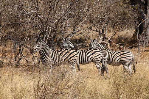 botswana2008_animals_21