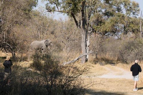 botswana2008_animals_22