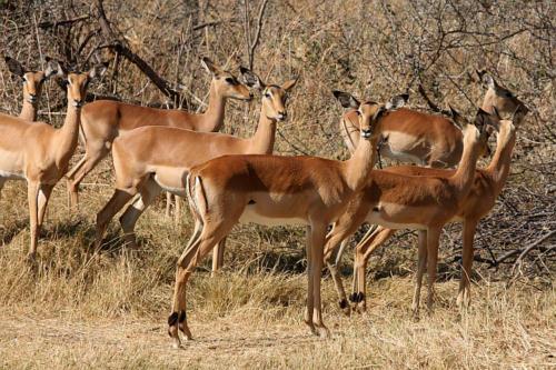 botswana2008_animals_23