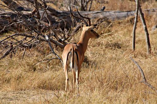 botswana2008_animals_24