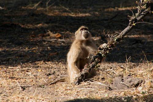 botswana2008_animals_25
