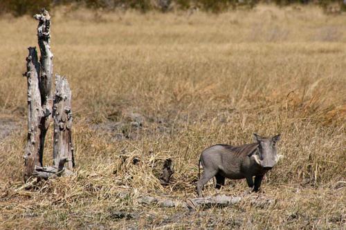 botswana2008_animals_26
