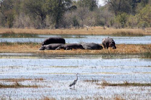 botswana2008_animals_28