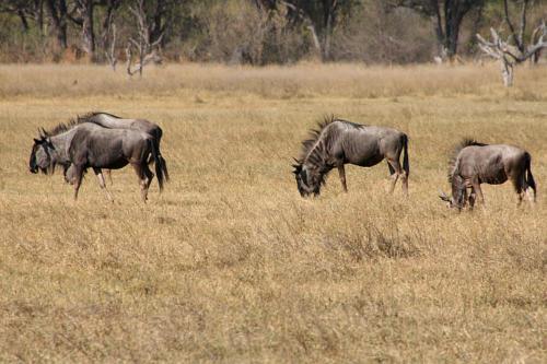 botswana2008_animals_29