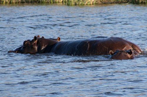 botswana2008_animals_30