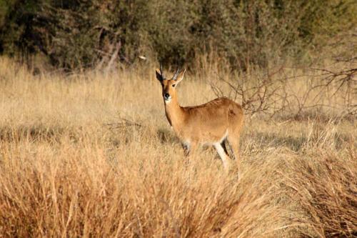 botswana2008_animals_31