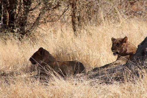 botswana2008_animals_32