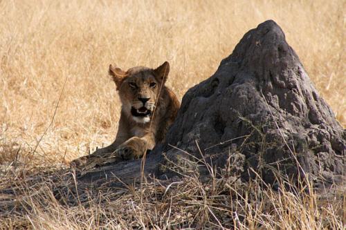 botswana2008_animals_33