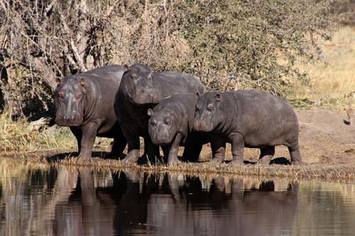 botswana2008_animals_35
