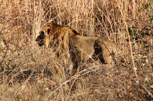 botswana2008_animals_36