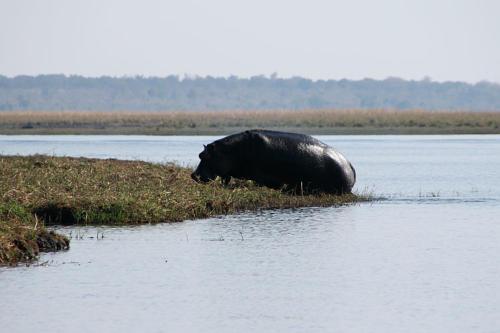 botswana2008_animals_37