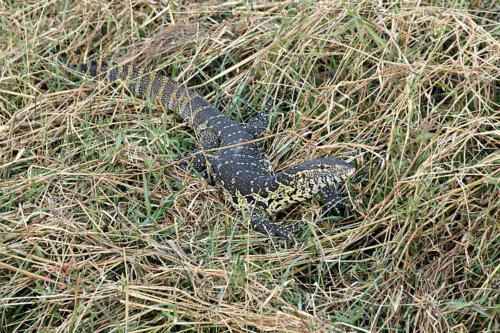 botswana2008_animals_40