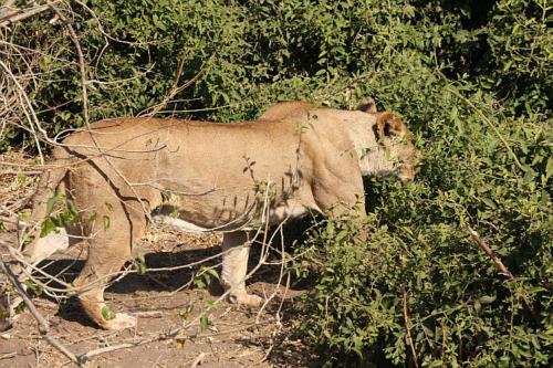 botswana2008_animals_42