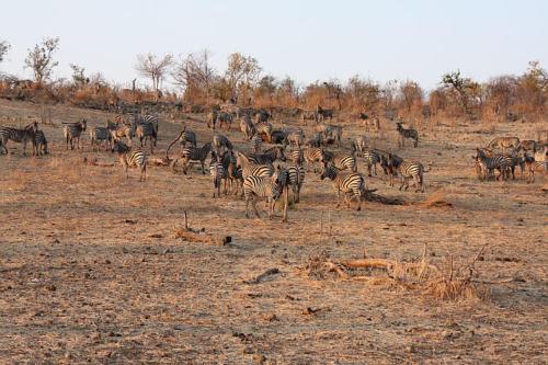 botswana2008_animals_44