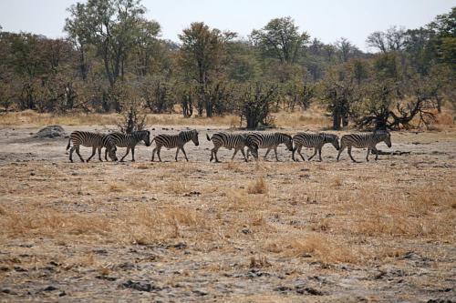 botswana2008_animals_45