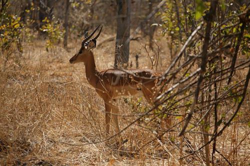 botswana2008_animals_46