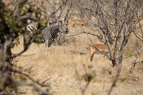 botswana2008_animals_47